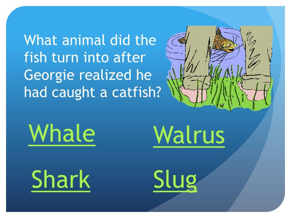 Whale Walrus Shark Slug