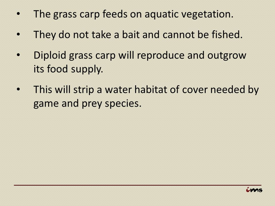The grass carp feeds on aquatic vegetation.