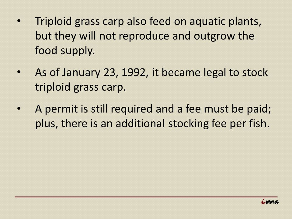 Triploid grass carp also feed on aquatic plants, but they will not reproduce and outgrow the food supply.