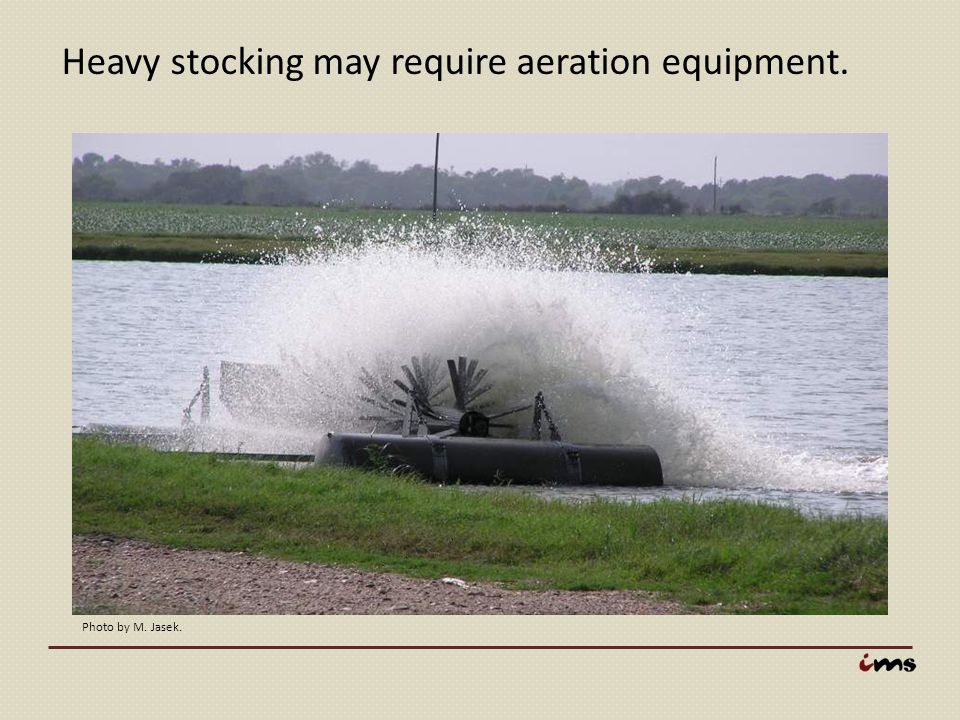 Heavy stocking may require aeration equipment.