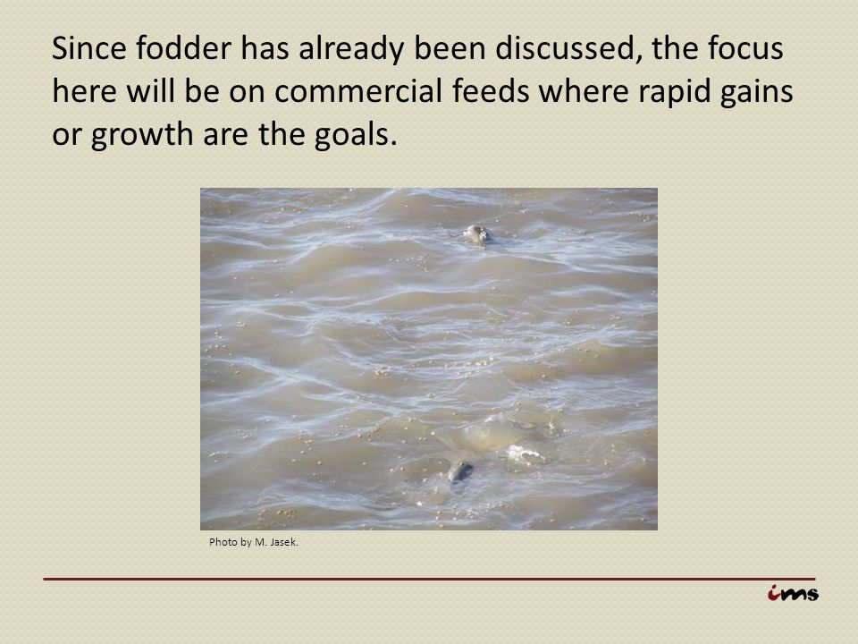 Since fodder has already been discussed, the focus here will be on commercial feeds where rapid gains or growth are the goals.