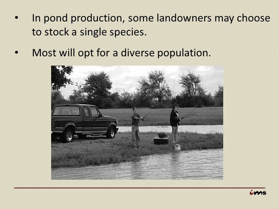 In pond production, some landowners may choose to stock a single species.