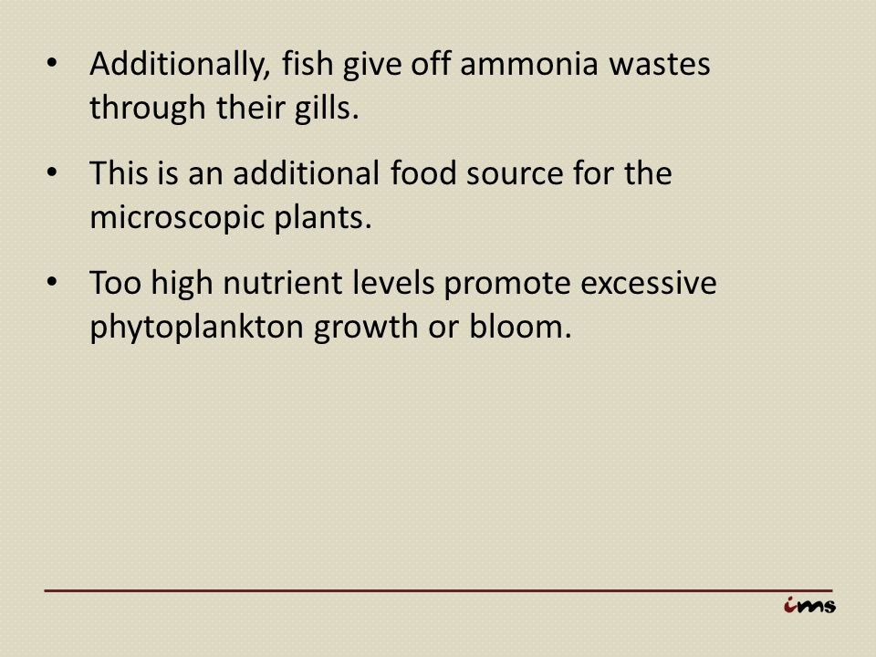 Additionally, fish give off ammonia wastes through their gills.