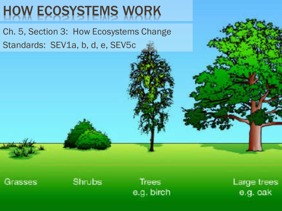 How Ecosystems Work Ch. 5, Section 3: How Ecosystems Change