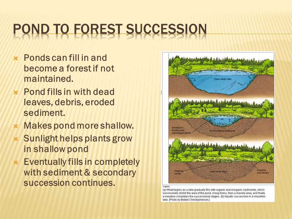 Pond to forest succession