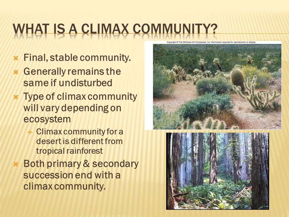 What is a climax community