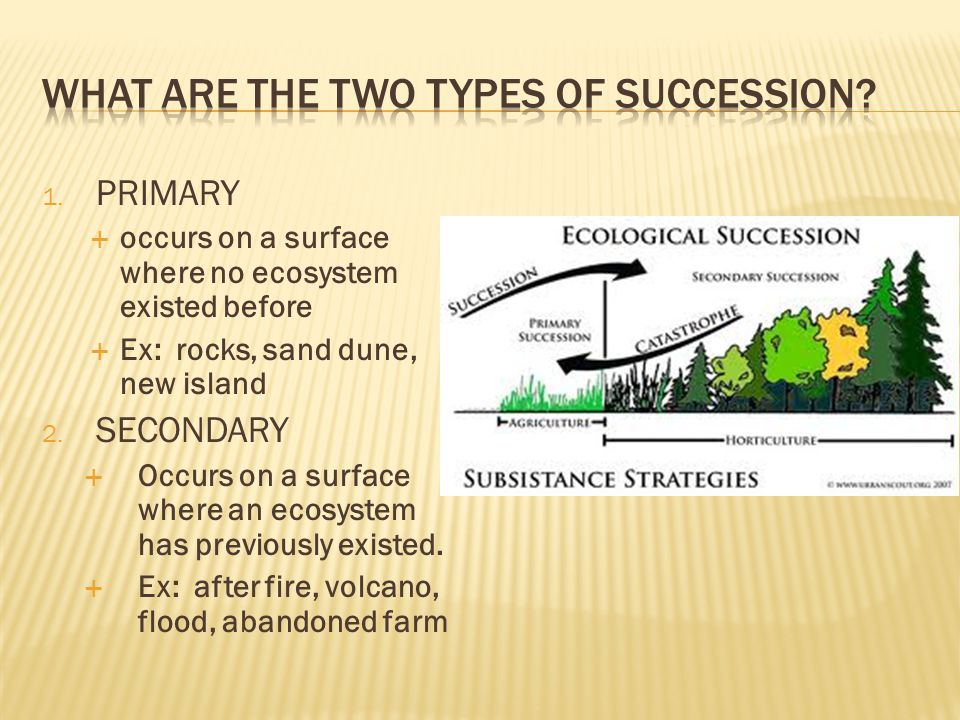 What are the two types of succession