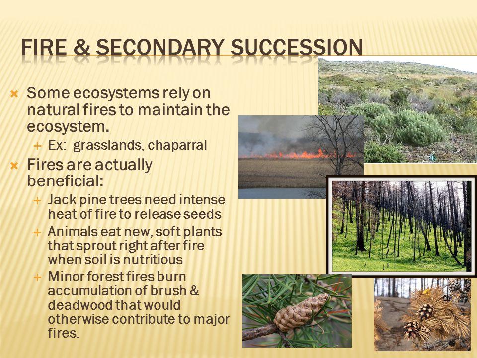 Fire & secondary succession