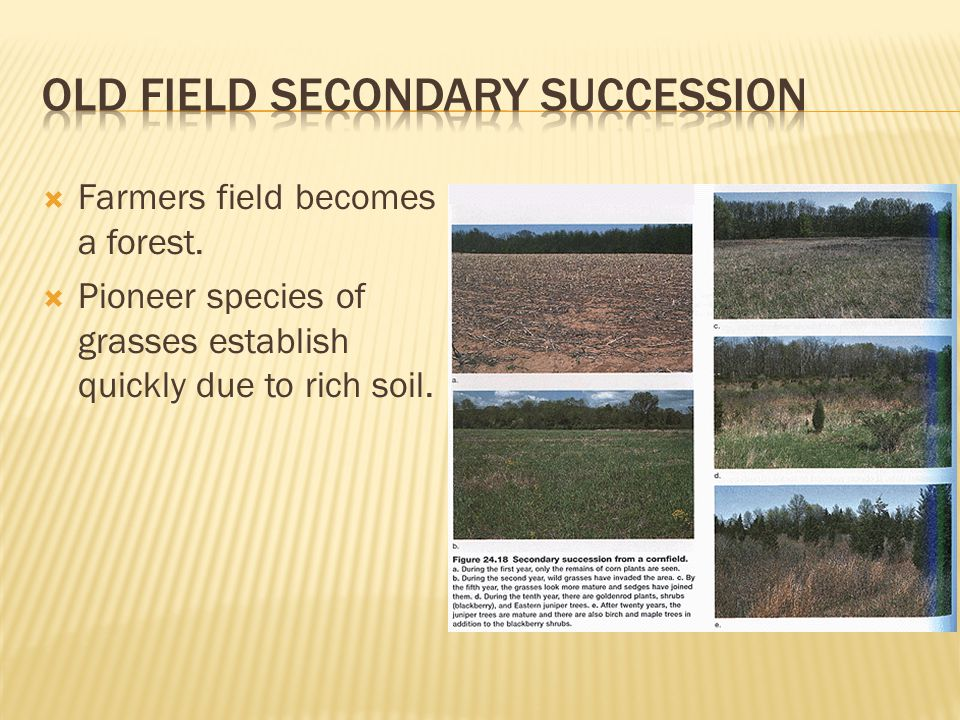 old field secondary succession
