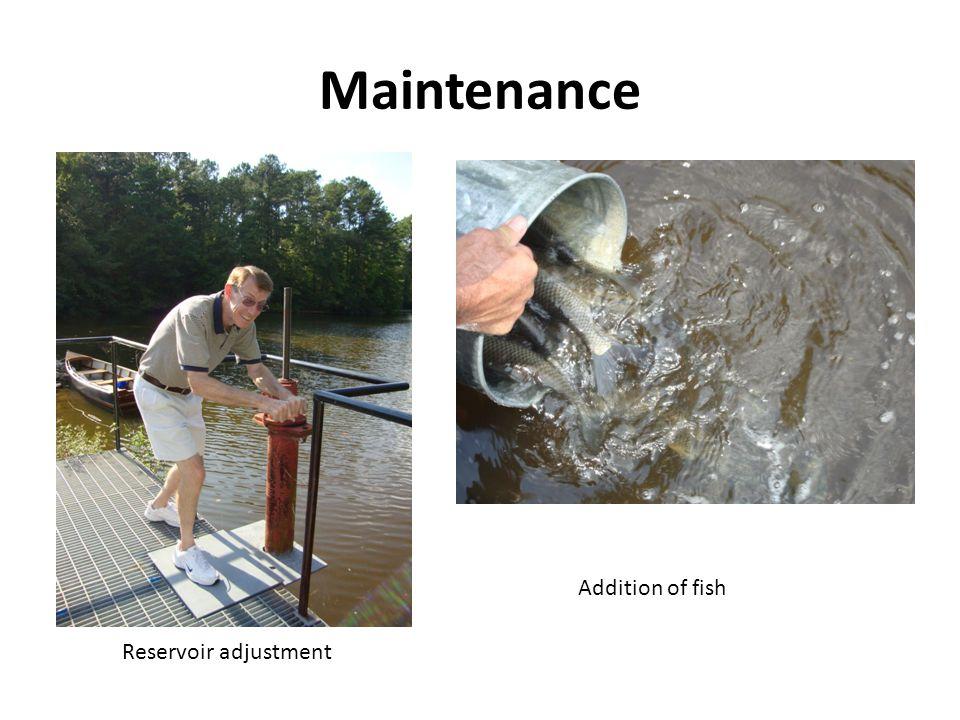 Maintenance Addition of fish Reservoir adjustment