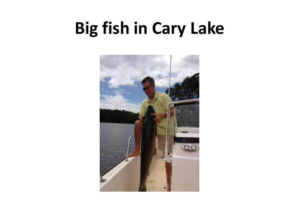 Big fish in Cary Lake