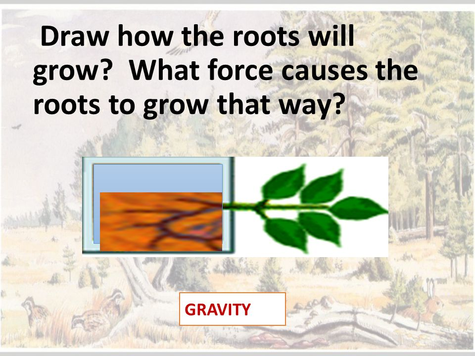 Draw how the roots will grow