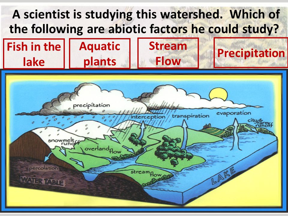 A scientist is studying this watershed