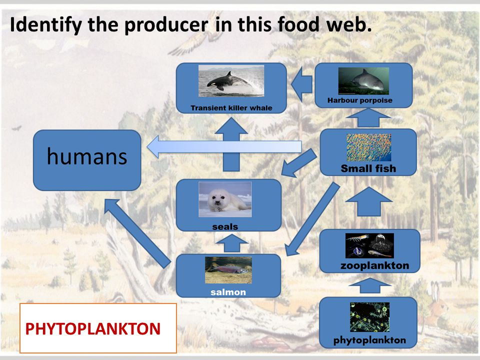 Identify the producer in this food web.
