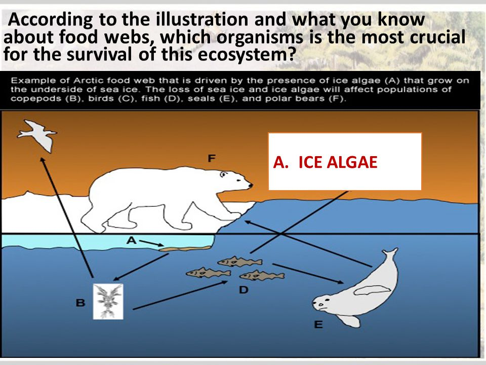 According to the illustration and what you know about food webs, which organisms is the most crucial for the survival of this ecosystem