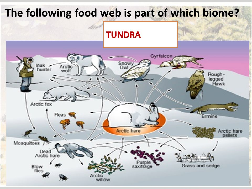 The following food web is part of which biome