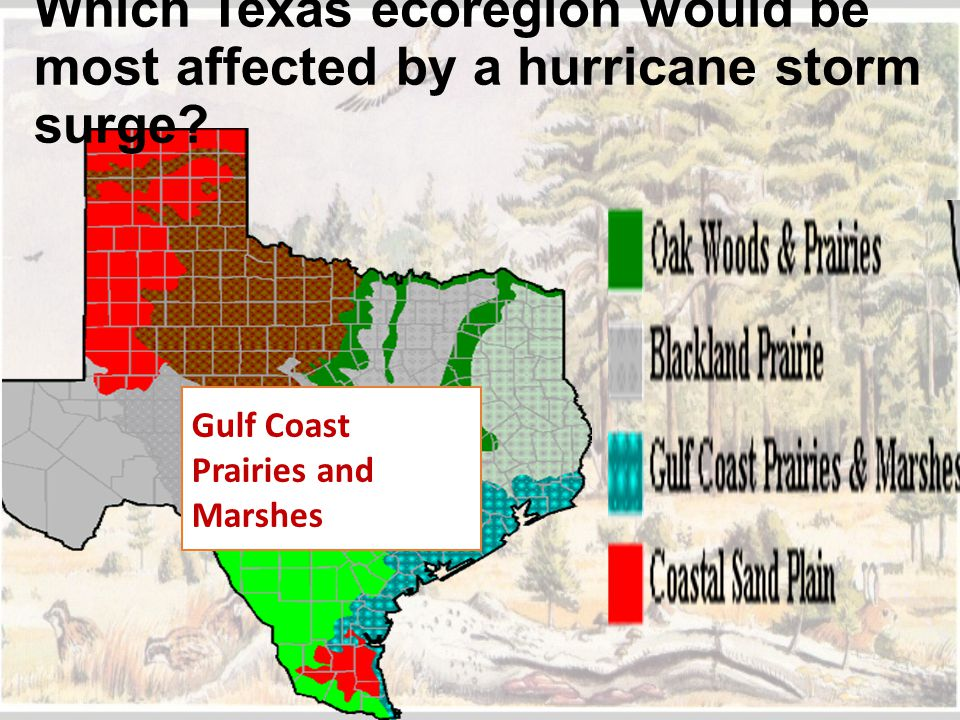 Which Texas ecoregion would be most affected by a hurricane storm surge