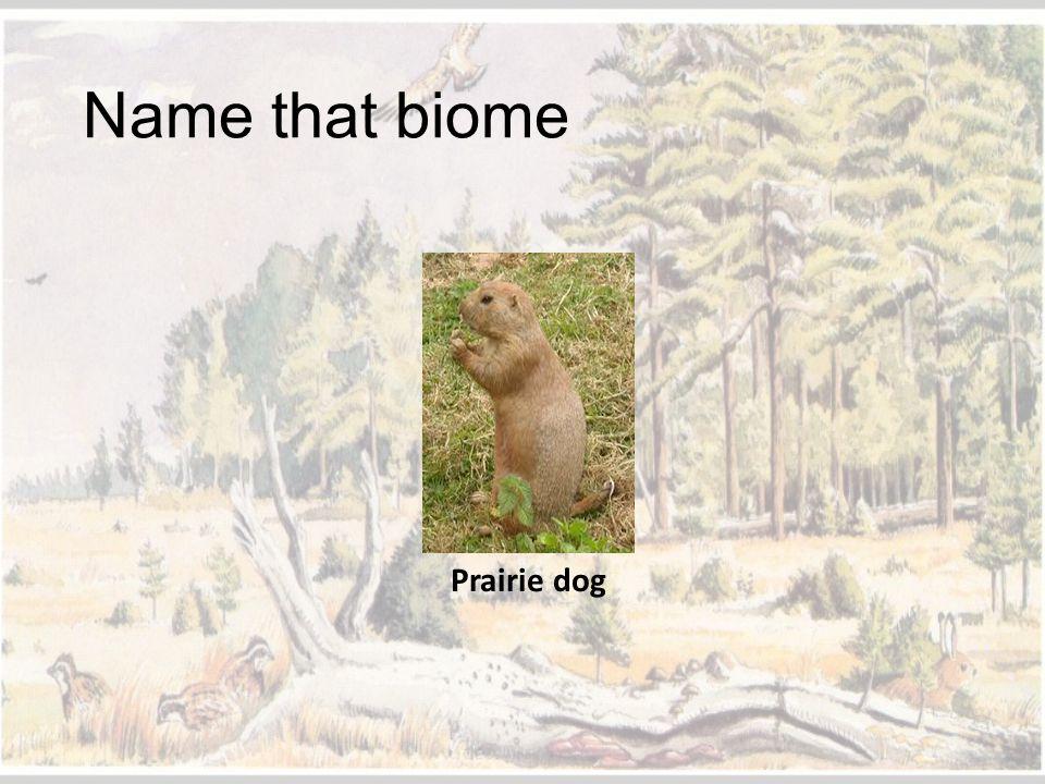 Name that biome Prairie dog