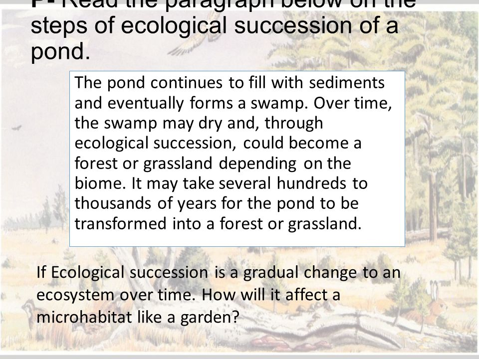 P- Read the paragraph below on the steps of ecological succession of a pond.