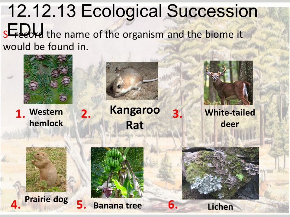 12.12.13 Ecological Succession EDU