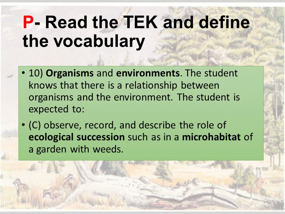 P- Read the TEK and define the vocabulary