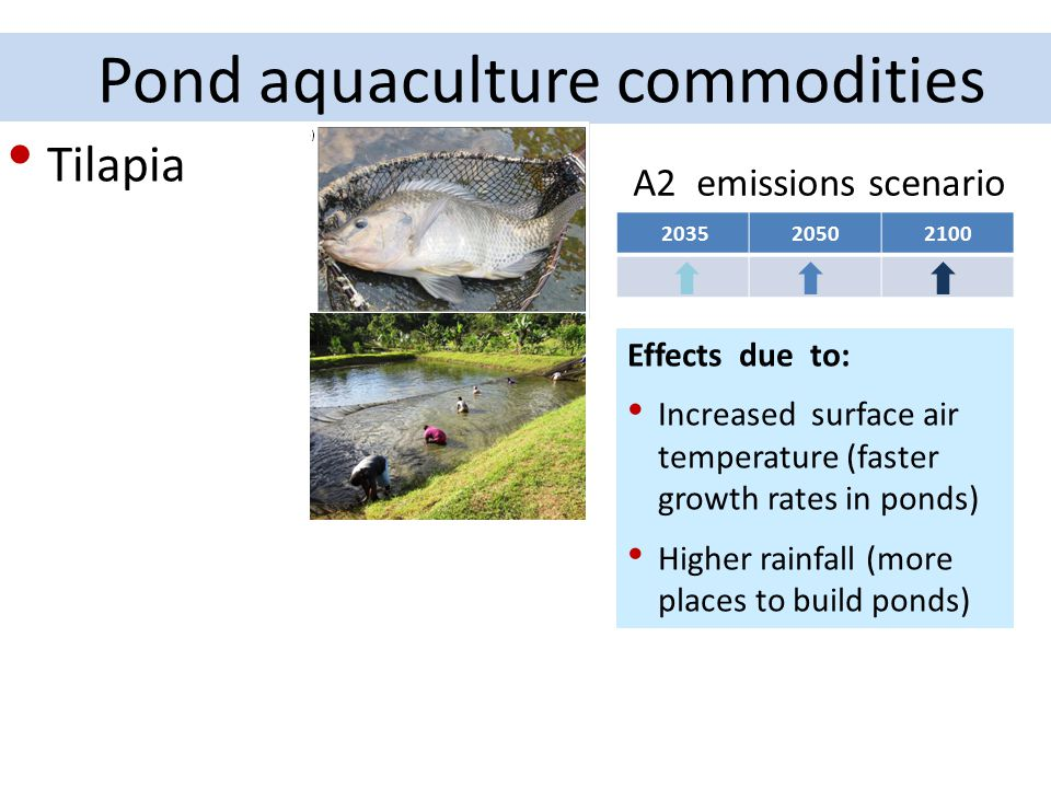 Pond aquaculture commodities