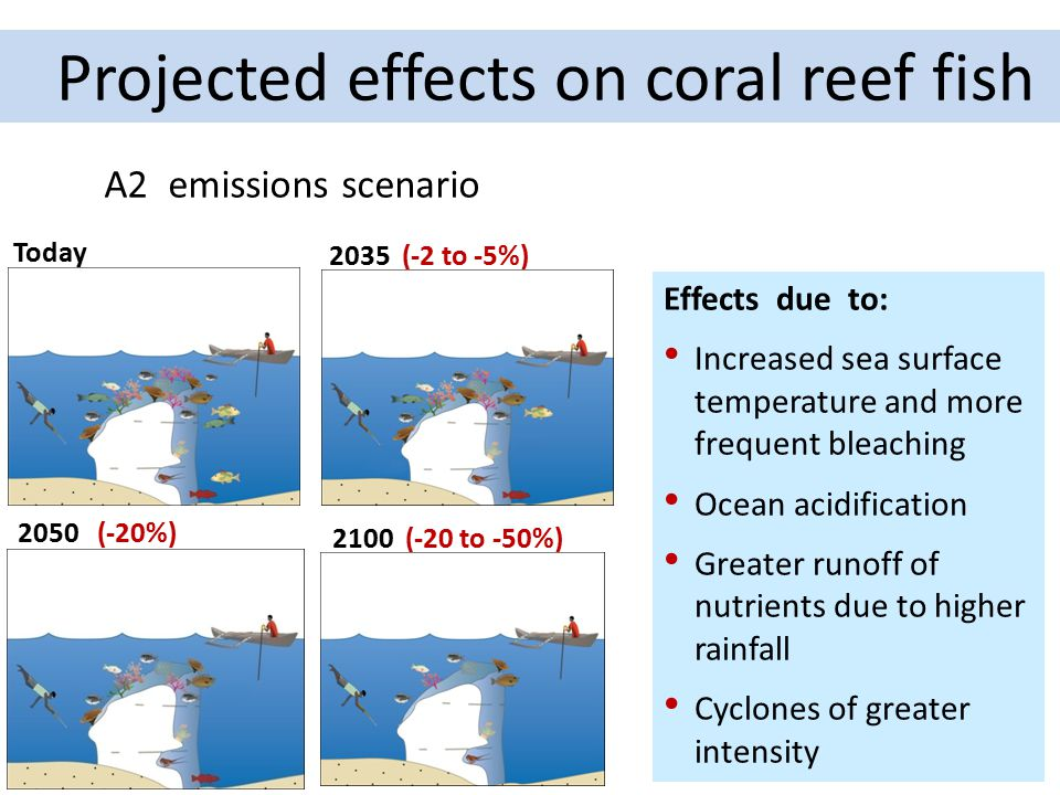 Projected effects on coral reef fish