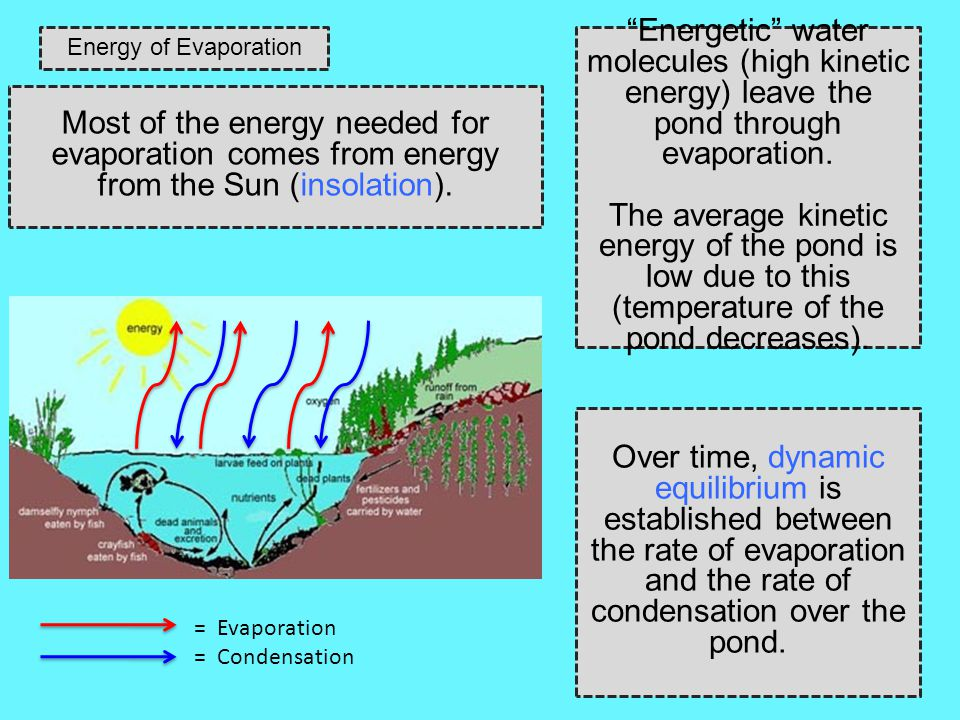 Energy of Evaporation Energetic water molecules (high kinetic energy) leave the pond through evaporation.