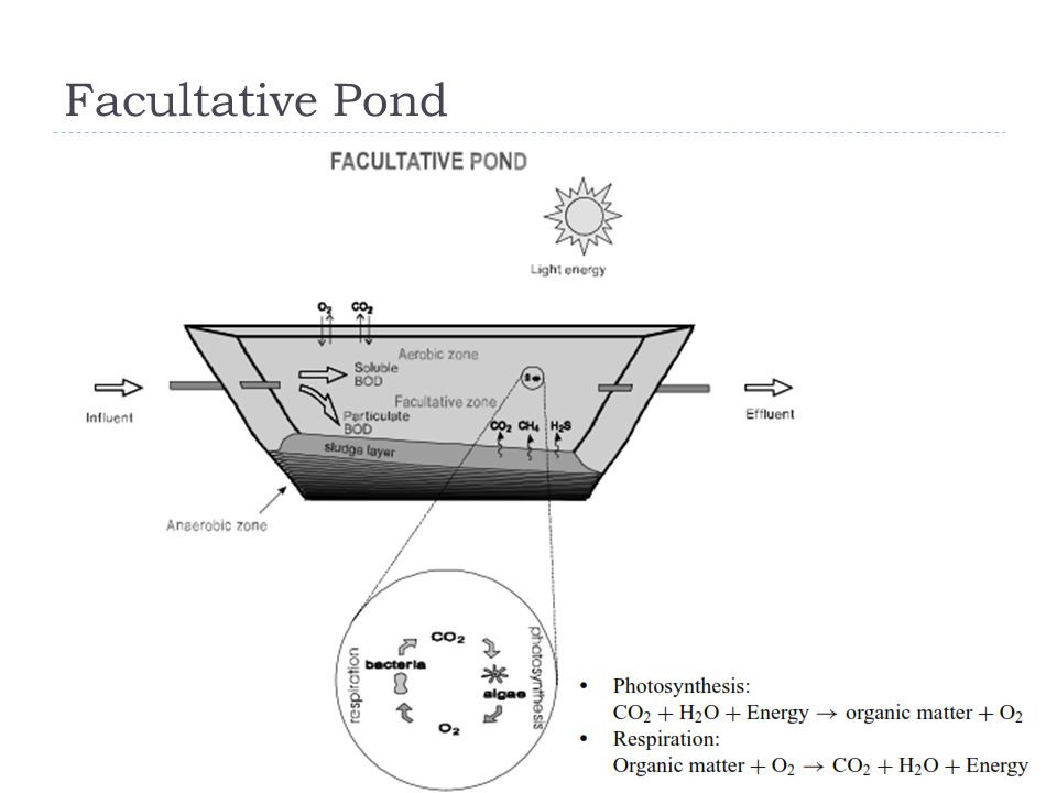 Facultative Pond
