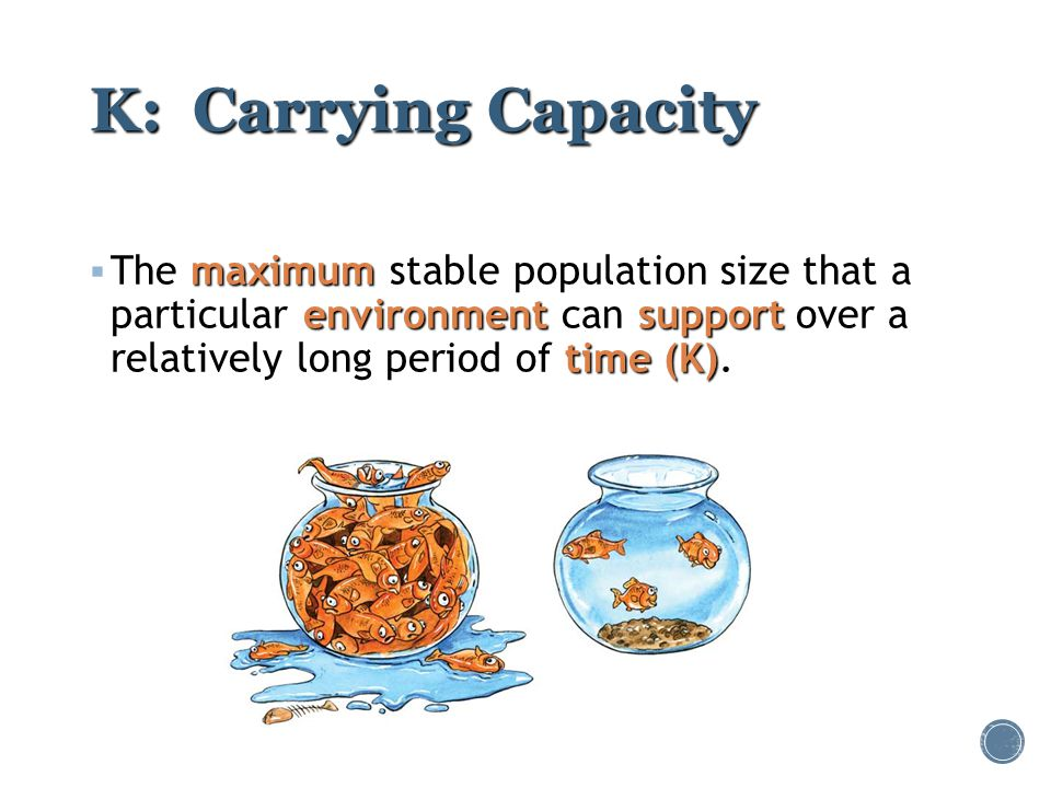K: Carrying Capacity The maximum stable population size that a particular environment can support over a relatively long period of time (K).