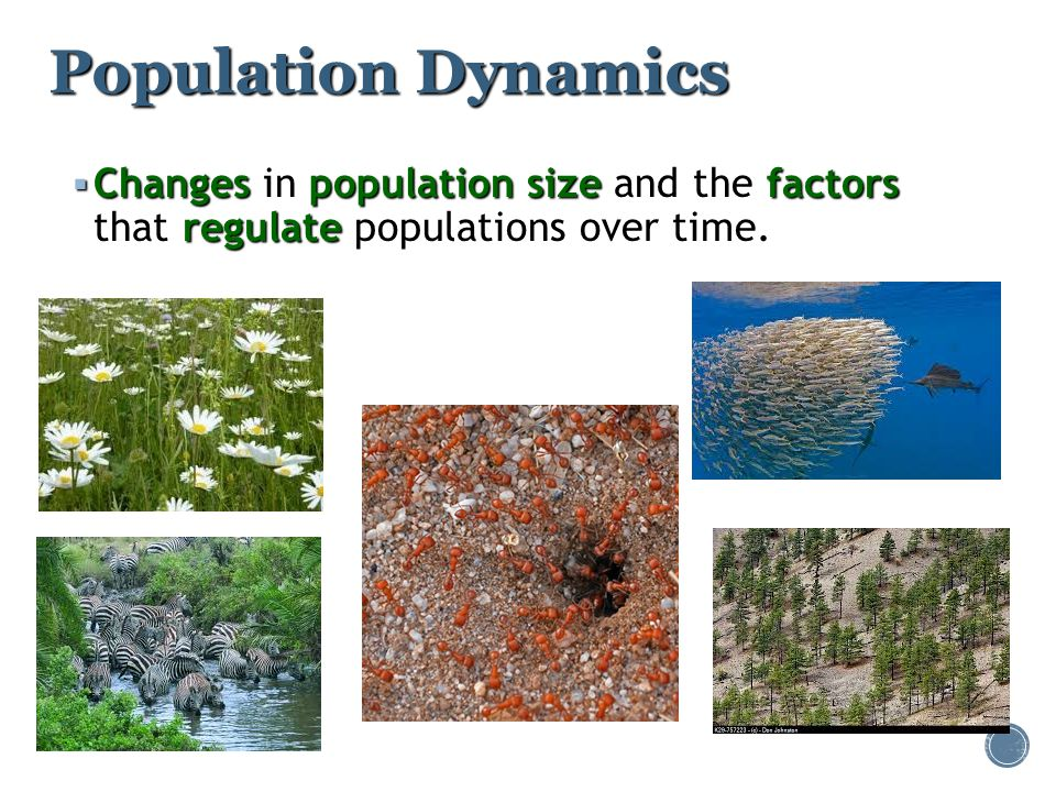 Population Dynamics Changes in population size and the factors that regulate populations over time.