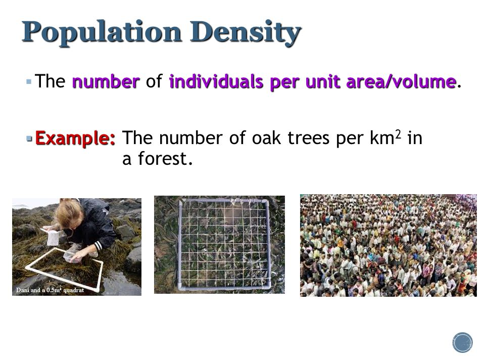 Population Density The number of individuals per unit area/volume.