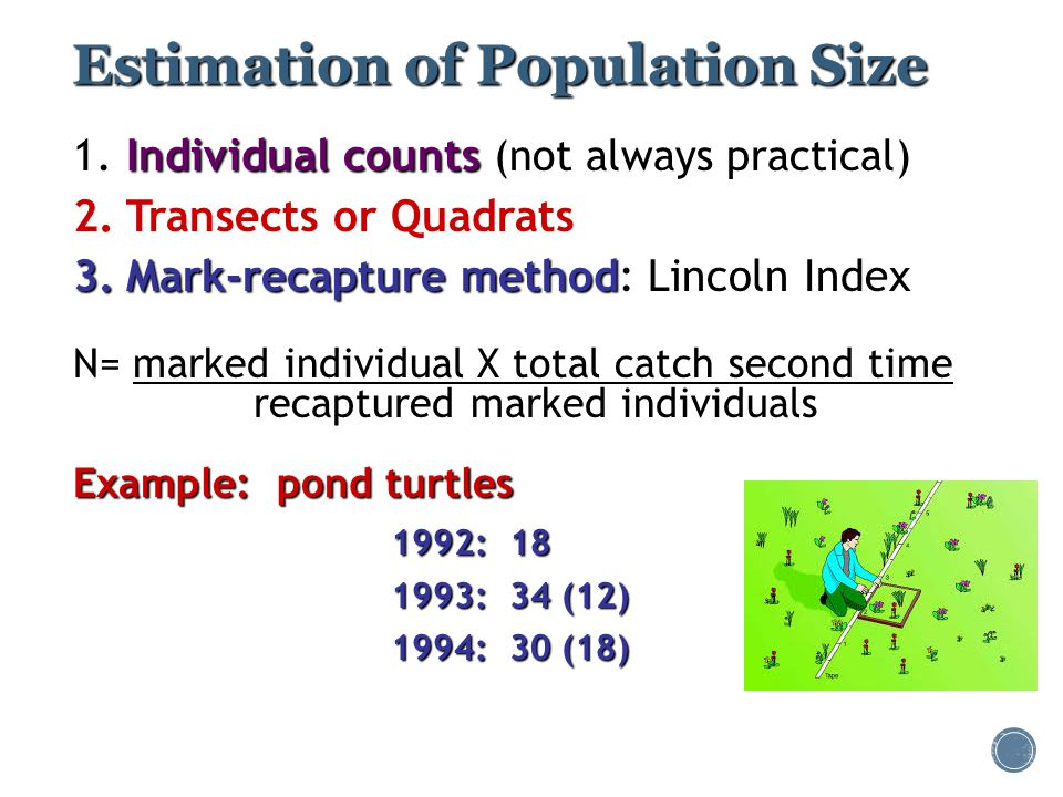 Estimation of Population Size