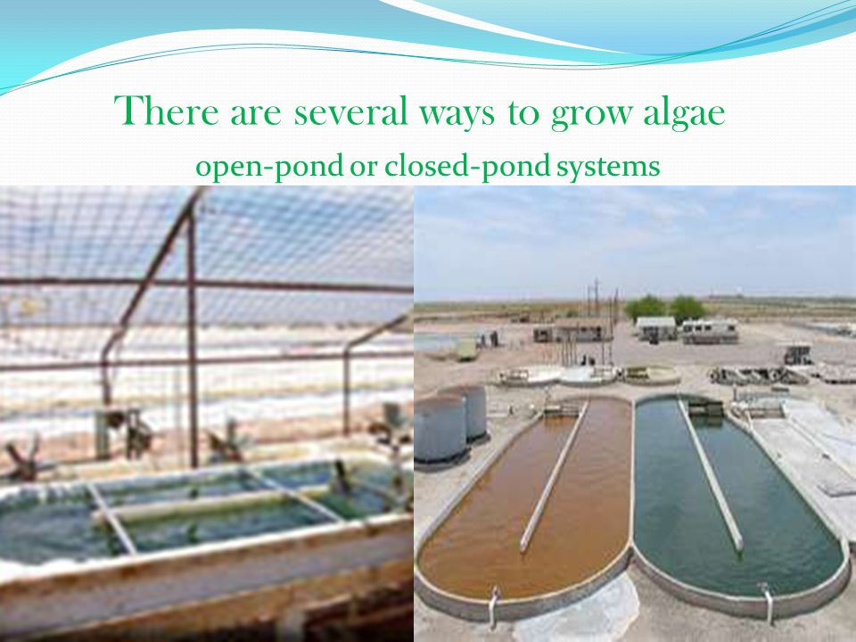 There are several ways to grow algae