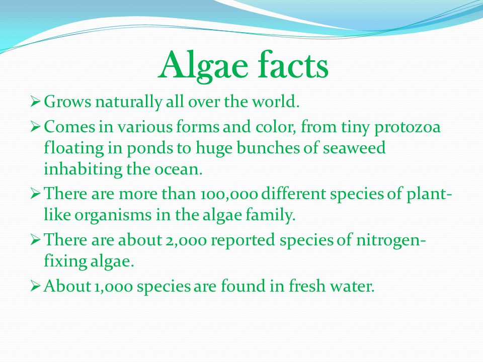 Algae facts Grows naturally all over the world.