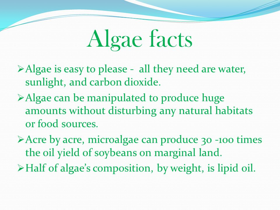 Algae facts Algae is easy to please - all they need are water, sunlight, and carbon dioxide.