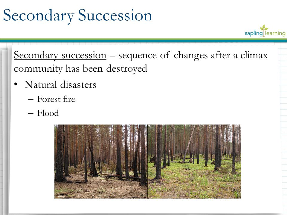 Secondary Succession Secondary succession – sequence of changes after a climax community has been destroyed.