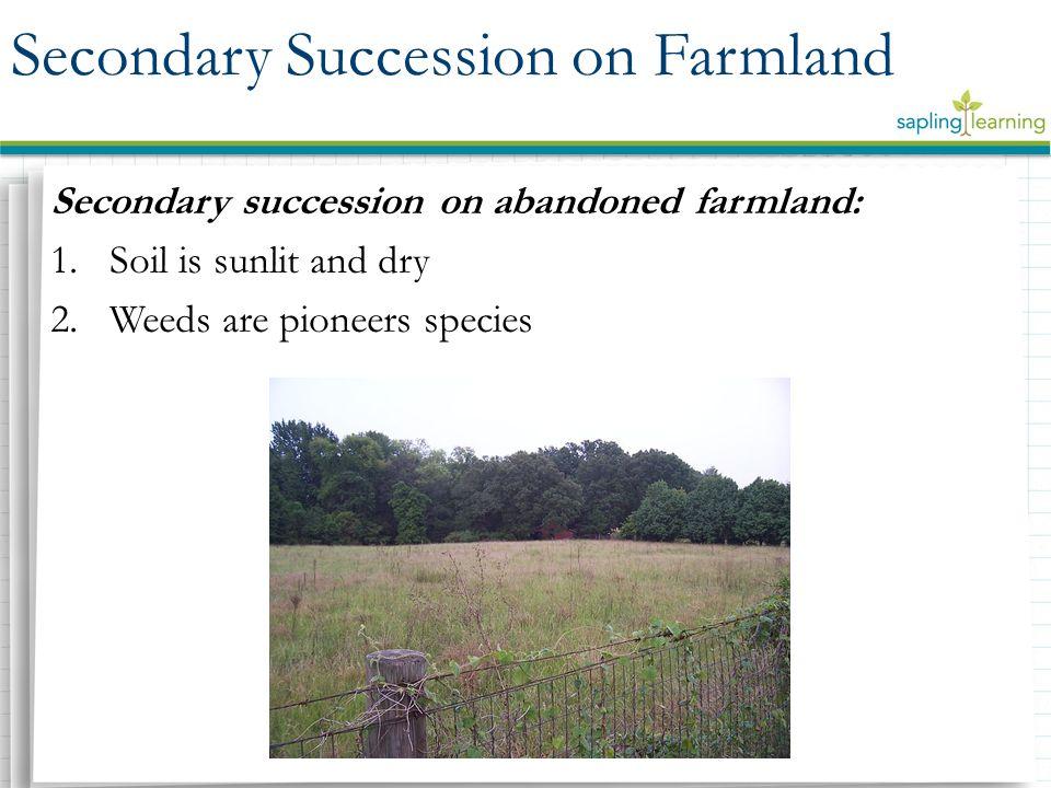 Secondary Succession on Farmland