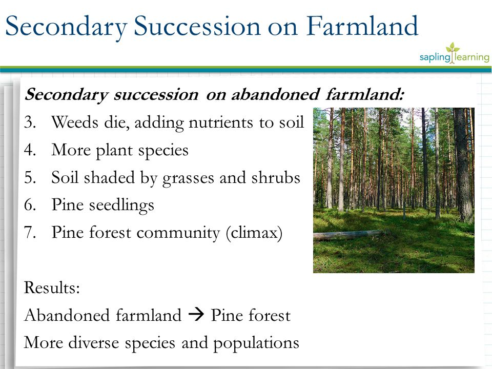 An overview of ecological succession