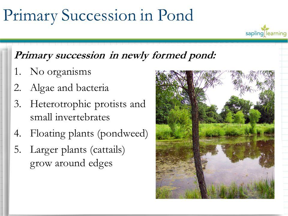 Primary Succession in Pond