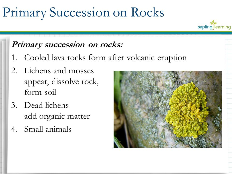Primary Succession on Rocks