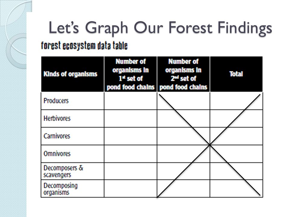 Let's Graph Our Forest Findings