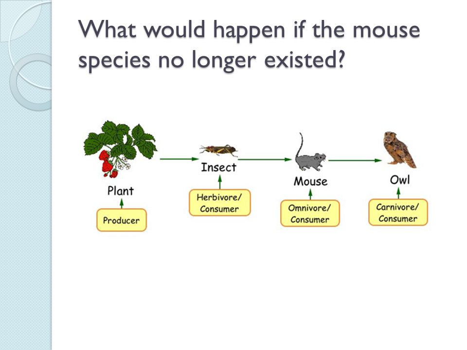 What would happen if the mouse species no longer existed