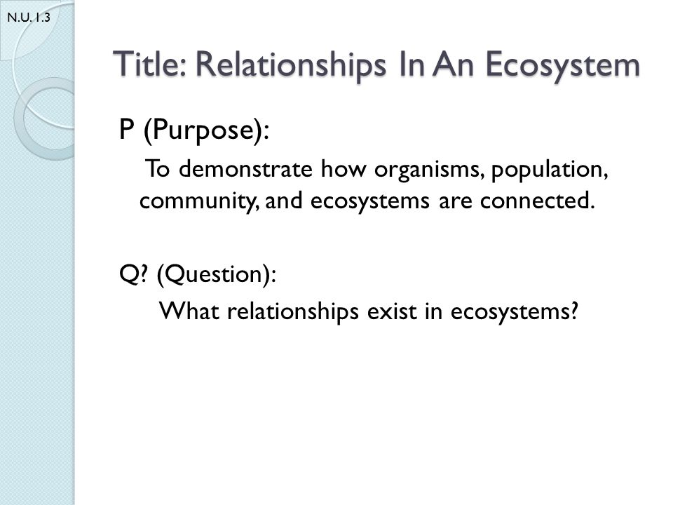 Title: Relationships In An Ecosystem