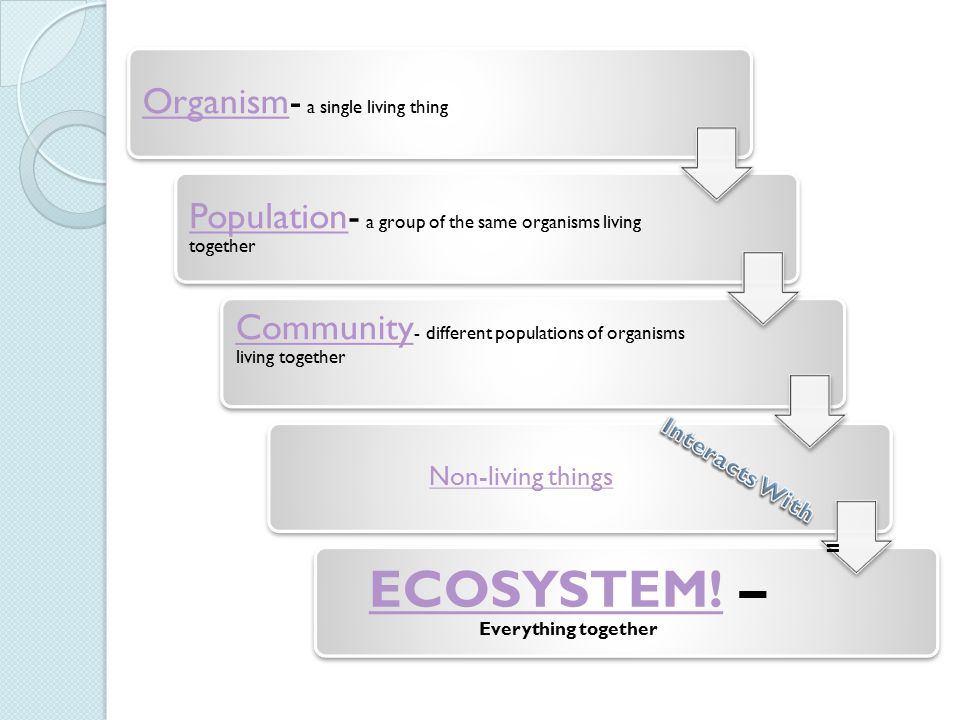 ECOSYSTEM! – Everything together