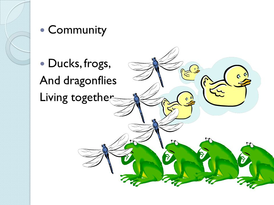 Community Ducks, frogs, And dragonflies Living together