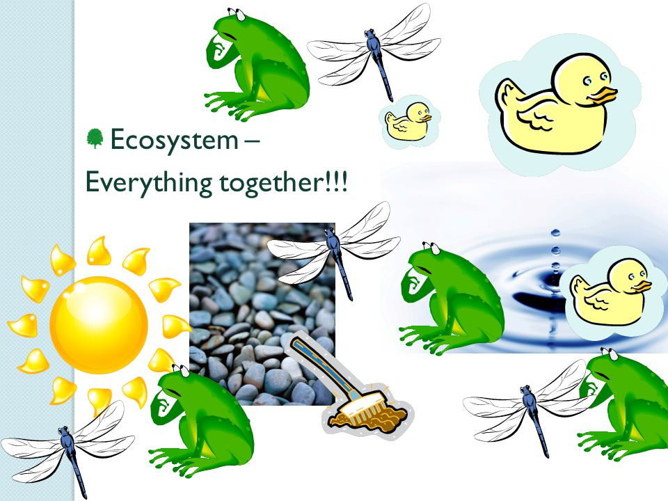 Ecosystem – Everything together!!!