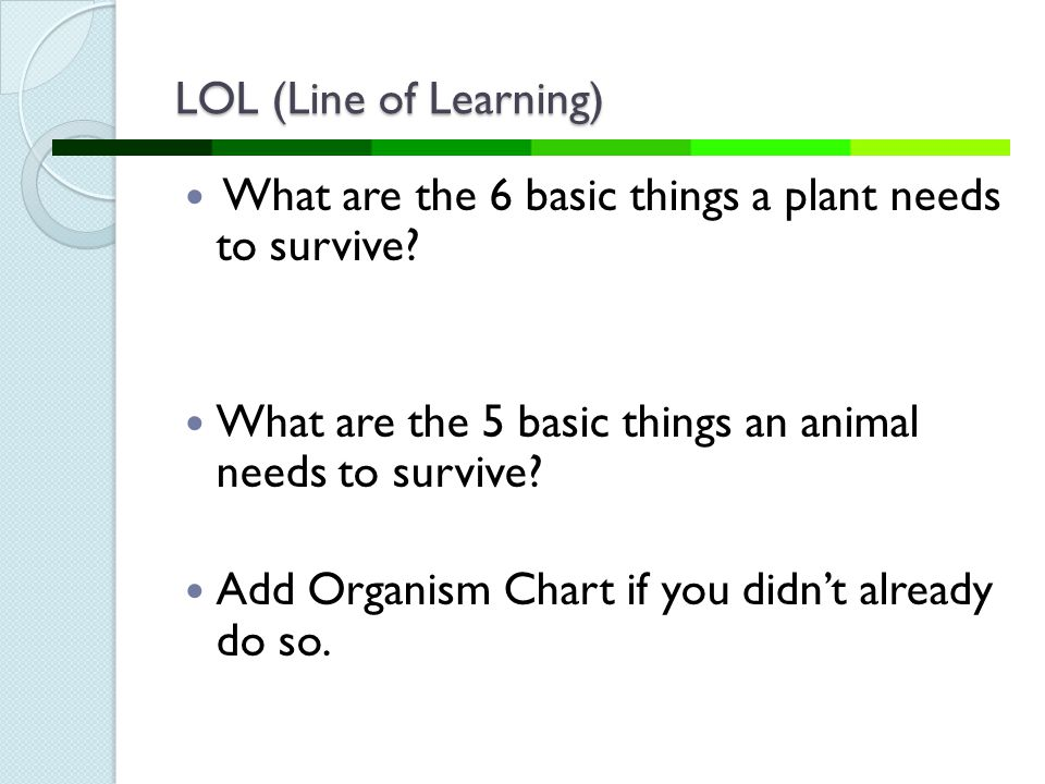 LOL (Line of Learning) What are the 6 basic things a plant needs to survive What are the 5 basic things an animal needs to survive