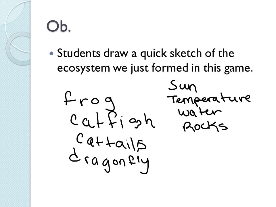 Ob. Students draw a quick sketch of the ecosystem we just formed in this game.