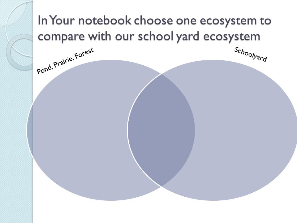 In Your notebook choose one ecosystem to compare with our school yard ecosystem